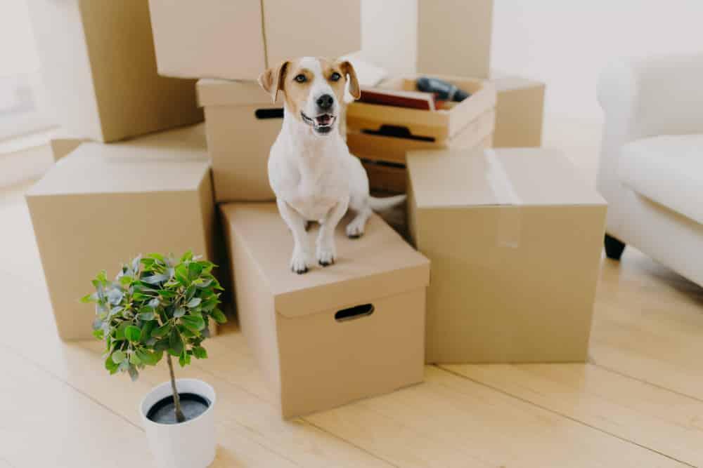 déménager avec un chien